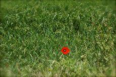lone flower...