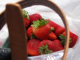 Granville Island Strawberries; Vancouver, Canada