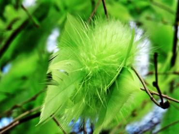 soft & green