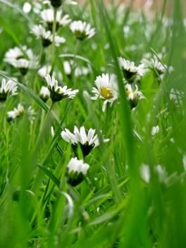 pretty in the grass