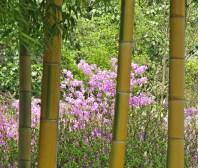 bambo & azalea