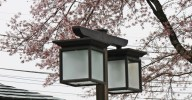 intersting lamps