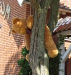bamse in the tree
