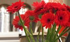 bill flowers