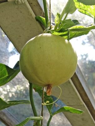 inside the melon house