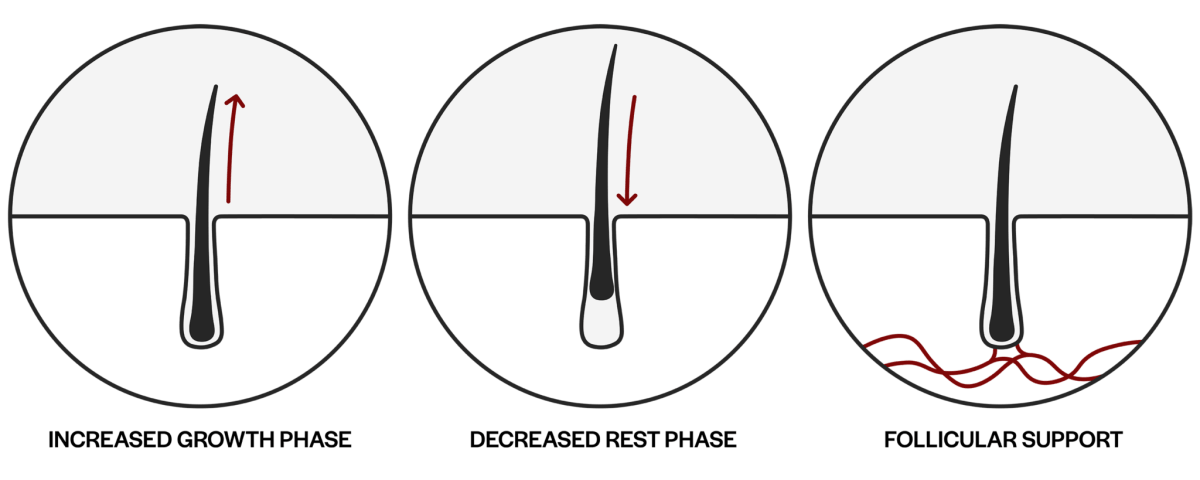 Hair follicle chart for Bio-Pixilion growth