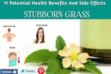 11 Top Herbs to Grow