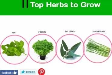 10 Best Herbs For Men
