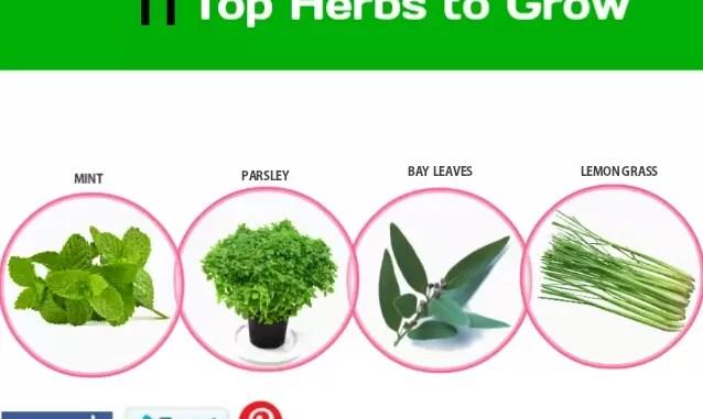 Top Herbs