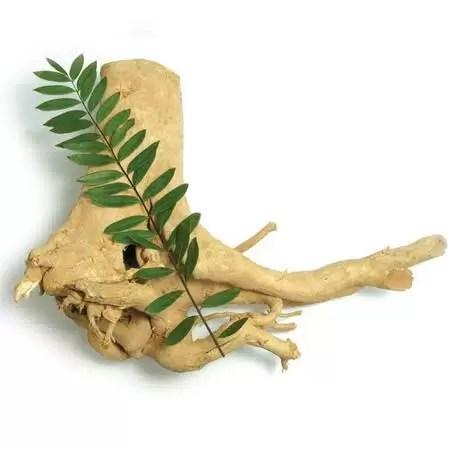 Best herbs for men relieve stress