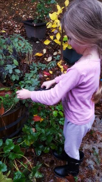 13-harvesting-herbs-in-the-rain