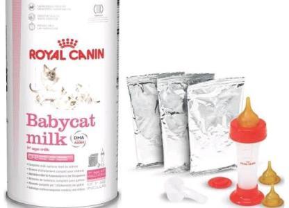 harga royal canin milk babycat