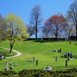 high park greenery
