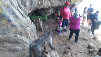 Baboon exiting