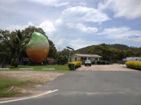 Giant Mango