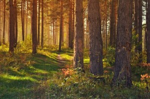 forest-89179_640