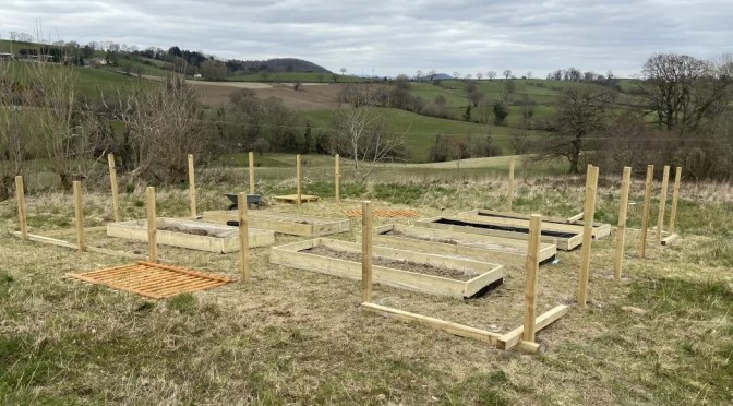 Building our first ever veg patch from scratch – part one