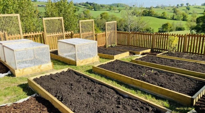 Our first veg patch – part four – protective boxes and heavy duty trellises