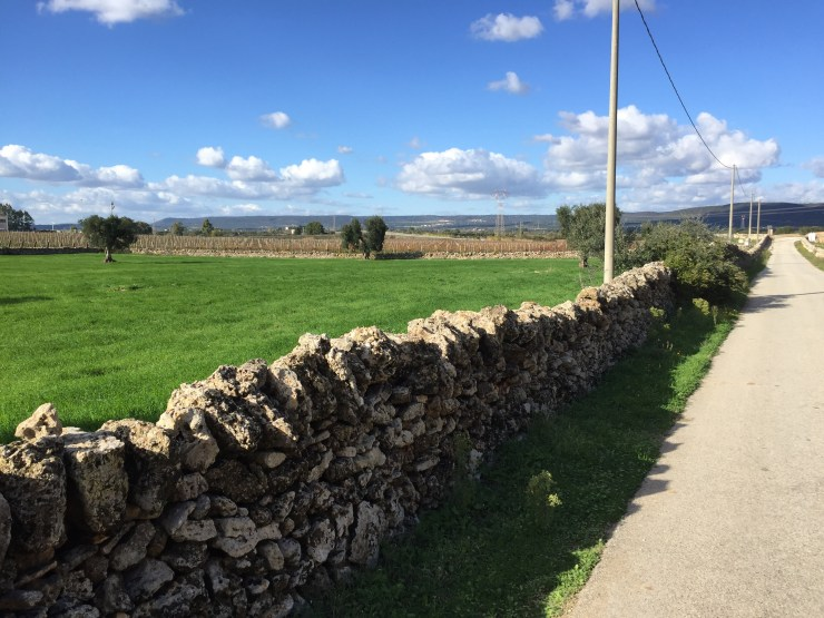 An example of the stone fences. They are everywhere!