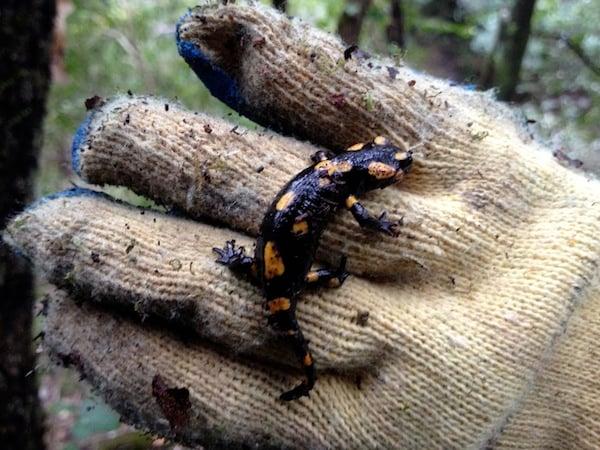 A salamander on my hand