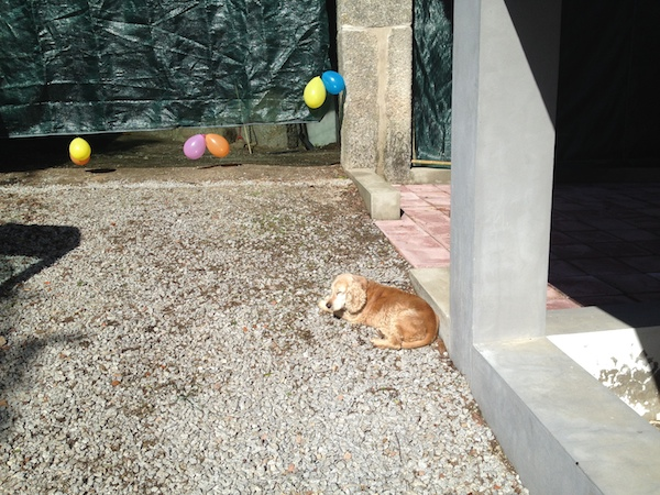 Scrappy lying on the gravel beside the hung tarp with balloons on