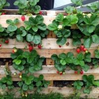 +35 Strawberry Pallet Planter Vertical - What Is It