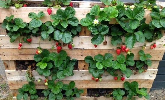 +35 Strawberry Pallet Planter Vertical – What Is It