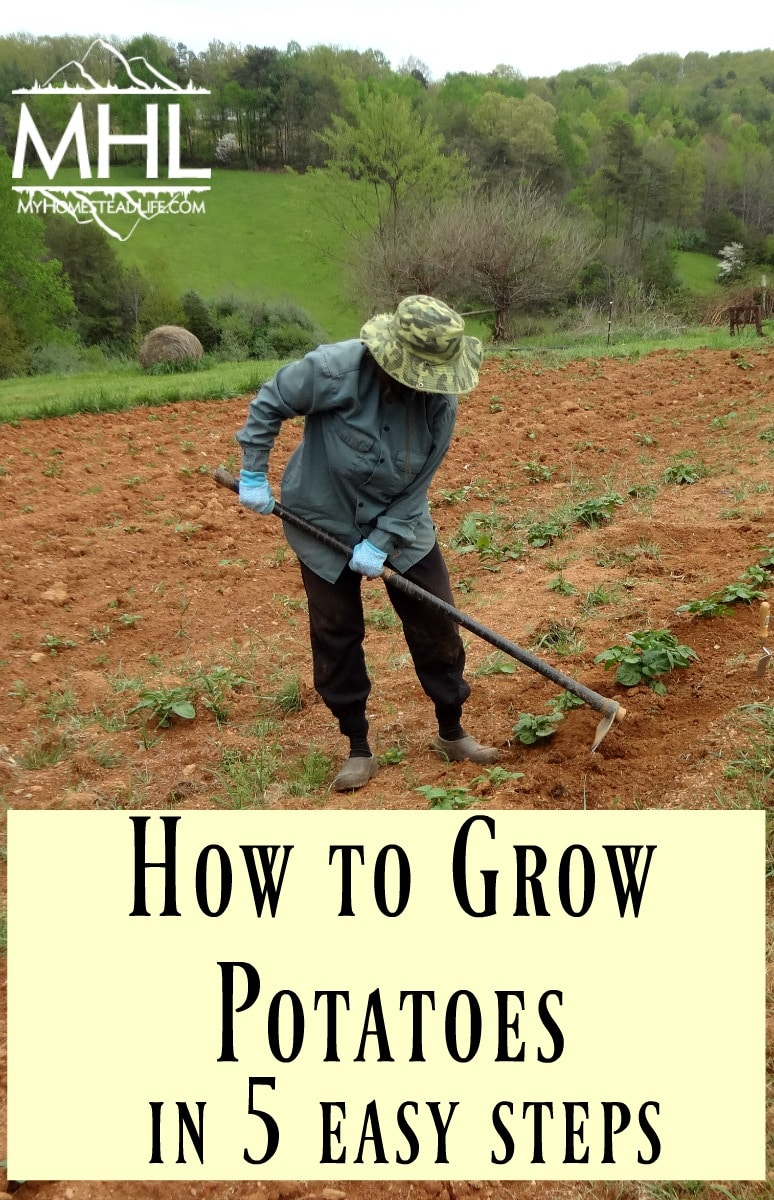 How to grow potatoes in 5 easy steps