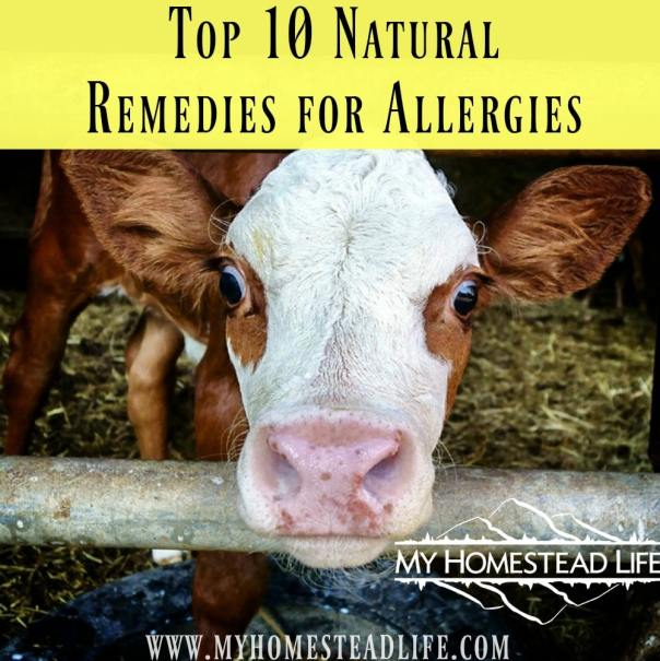 Top 10 Natural Remedies for Allergies. Sick of the OTC meds? Try one of these natural remedies.