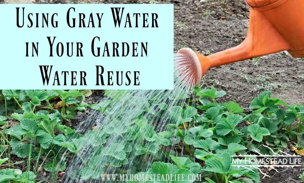 Using Gray Water in Your Garden- Water Reuse
