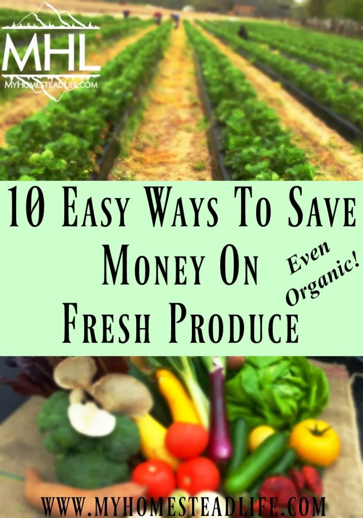 10 Easy Ways To Save Money On Fresh Produce- Even Organic!