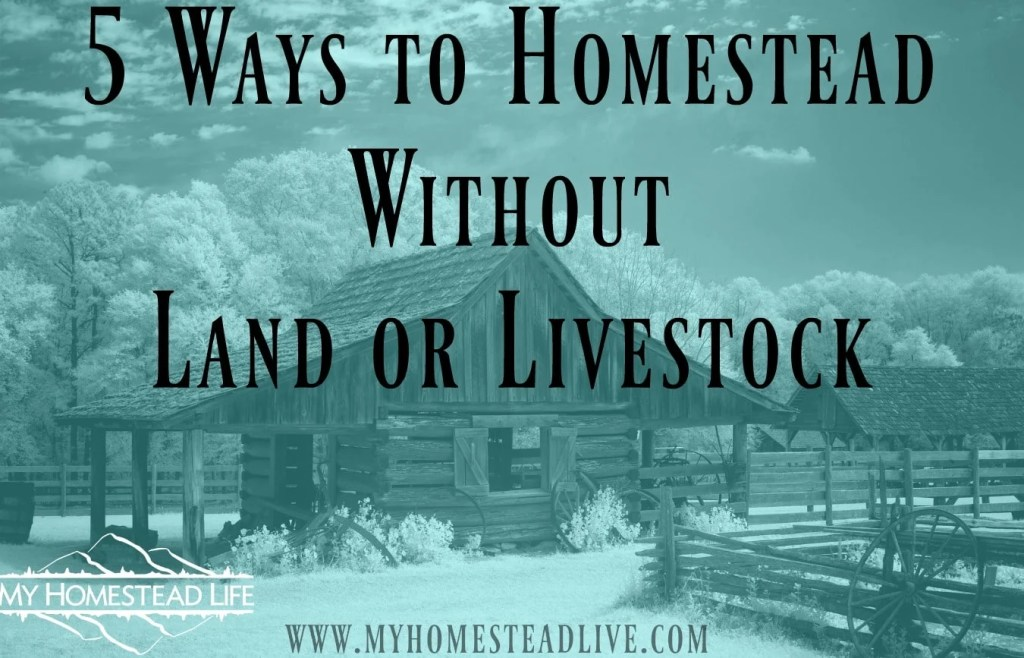 5 Ways to Homestead Without Land or Livestock