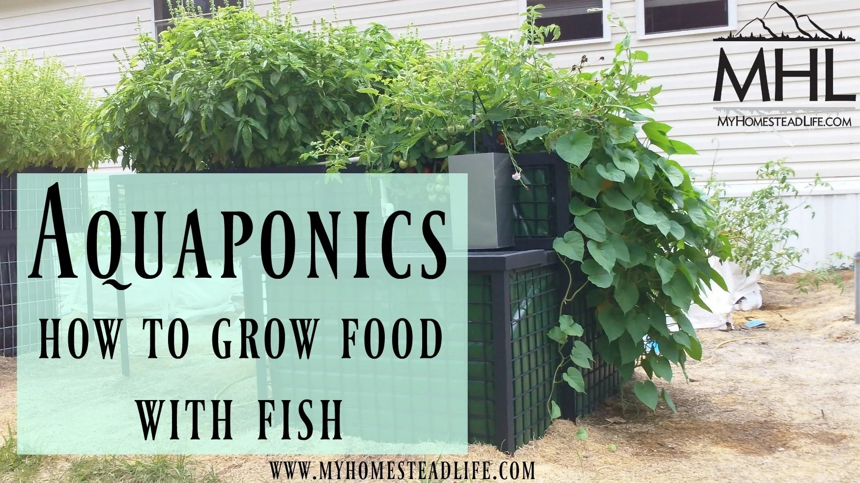 Aquaponics- How to Grow Food With Fish - My Homestead Life