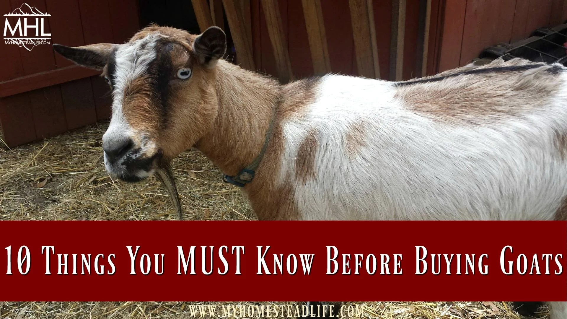 Goats For Sale! 10 Things You MUST Know Before Buying Goats