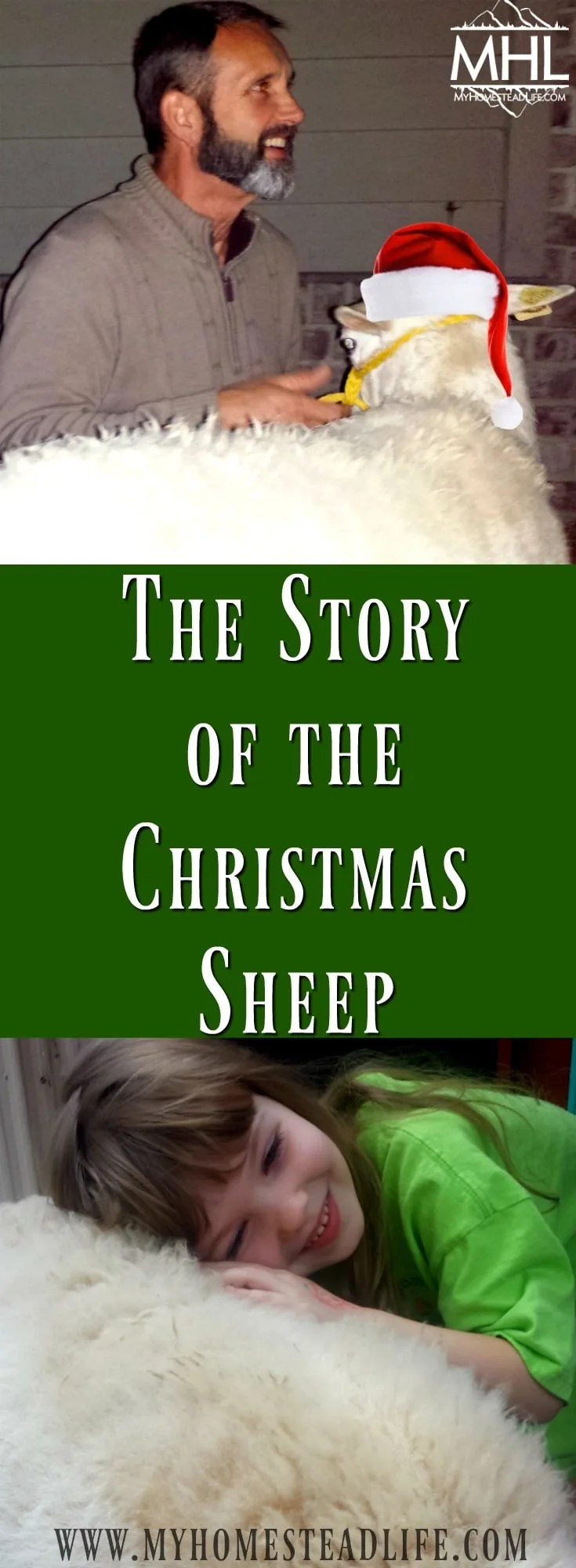 The Story Of The Christmas Sheep