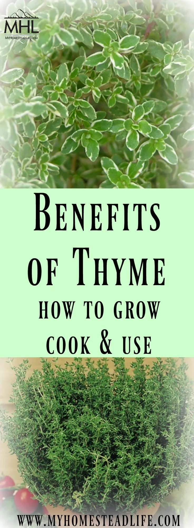 Benefits of Thyme how to grow, cook and use