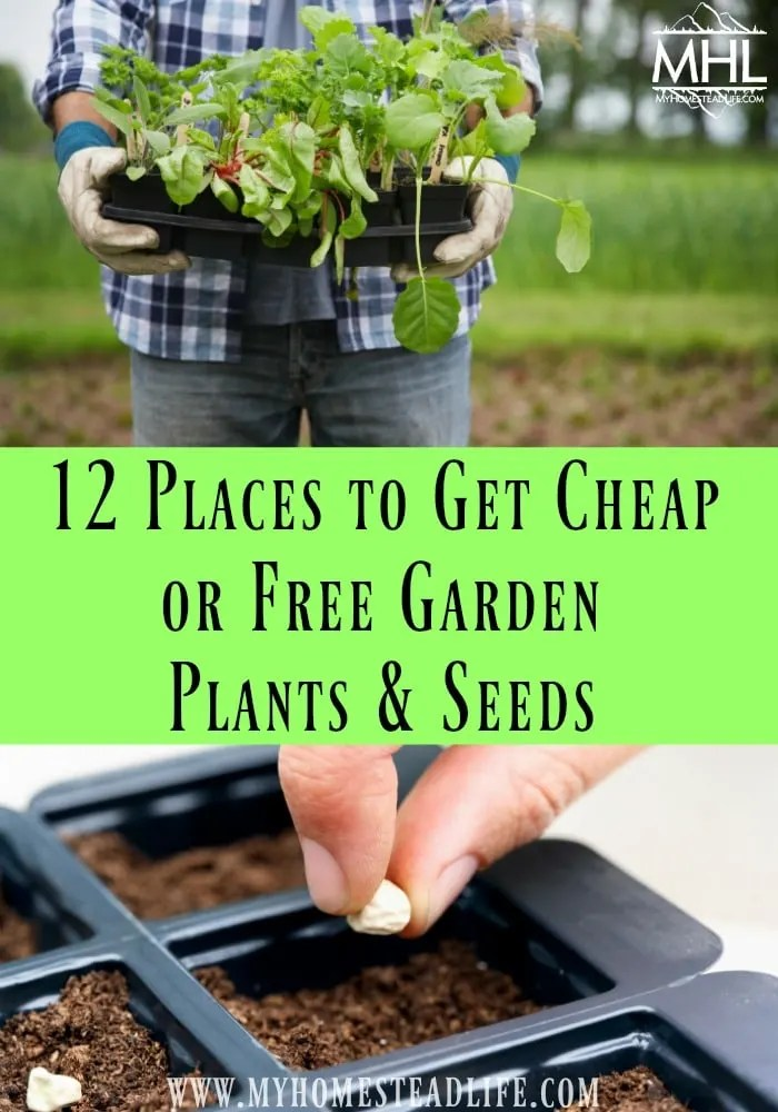 12 Places to get Cheap or Free Garden Plants and Seeds