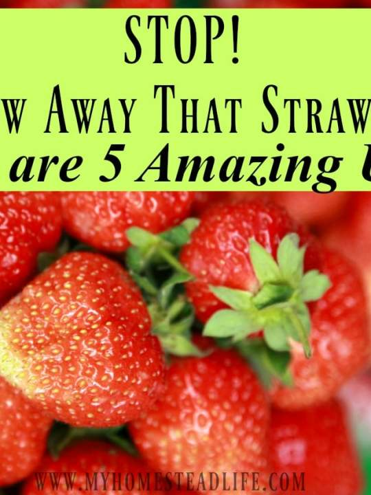 STOP! Don't Throw Away That Strawberry Top! Here are 5 Amazing Uses