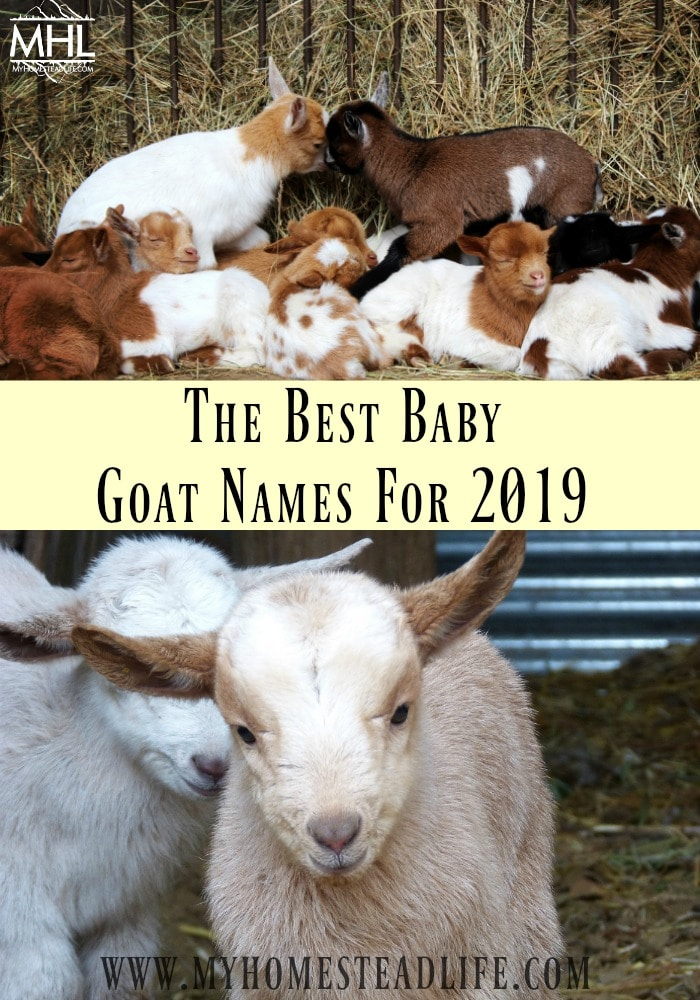 baby-goat-names