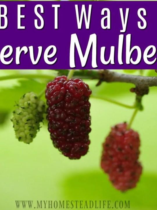 3 Best Ways To Preserve Mulberries