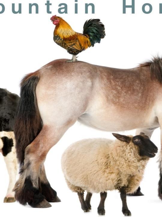 Livestock for Sale~ Smoky Mountain Homestead