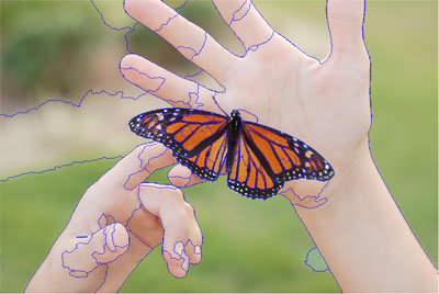 butterflyoriginal