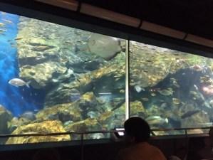 碧南海浜水族館の大水槽