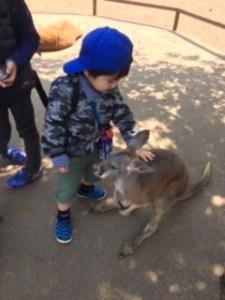 カンガルーと幼児