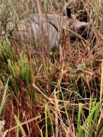 PHOTOGRAPHY CONTRIBUTED BY:- AAMIYA PARIHAR, CLASS:-X C K.V. NFR MALIGAON, from a tour to Kaziranga Wildlife Sanctuary