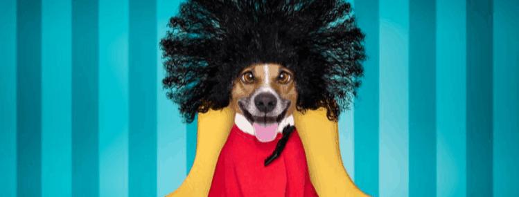 Warning Signs of a Bad Dog Groomer