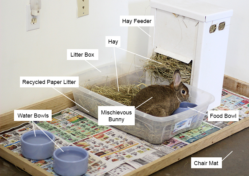 can u use cat litter for rabbits