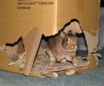 Kaninchen im Pappschloss