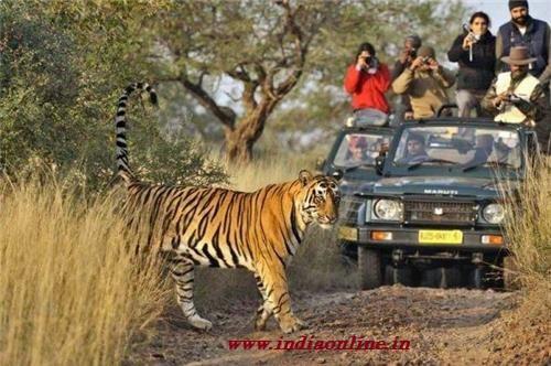 """""""Ven de Safari a India"""""""