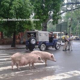 """""""El momento animal en India"""""""